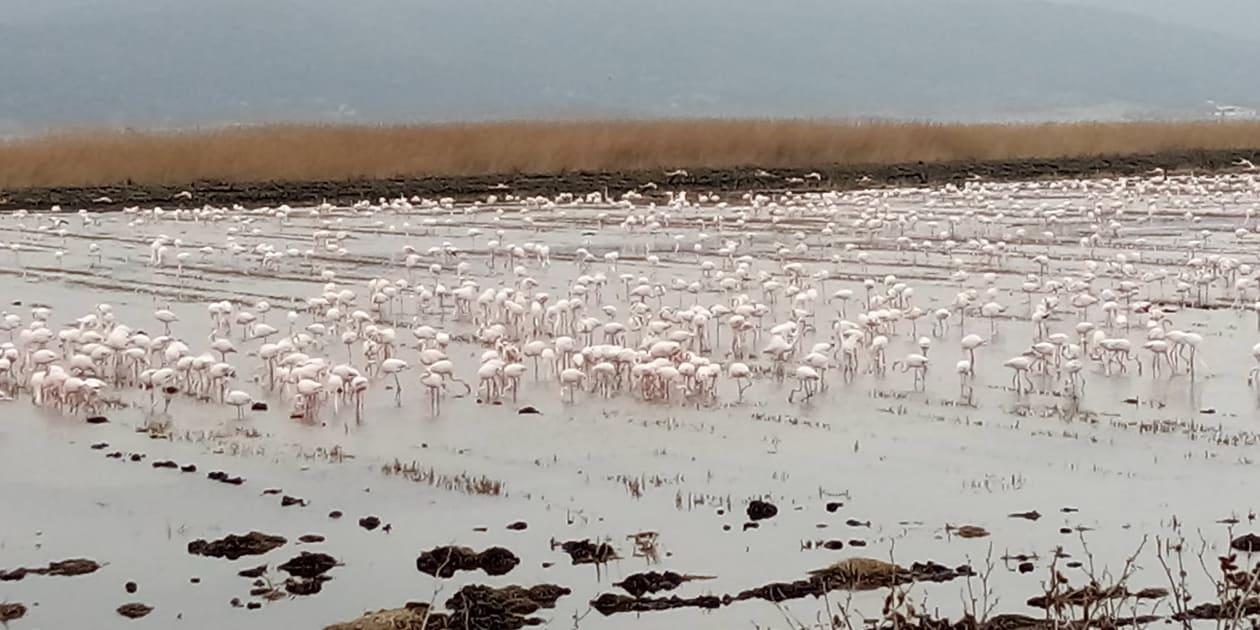 Meriç Deltası Gala'da kuşlar sayıldı