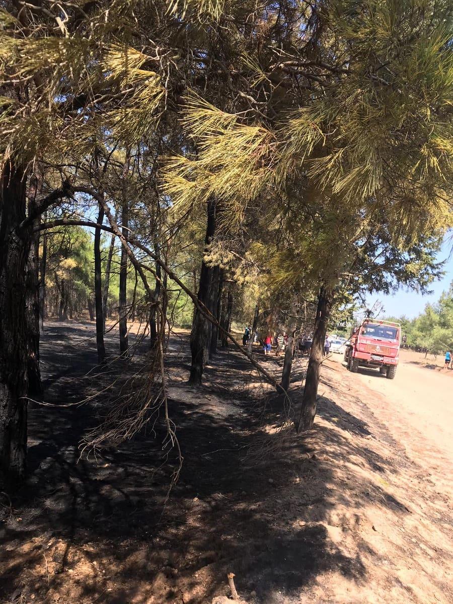 Sultaniçe'de orman yangını