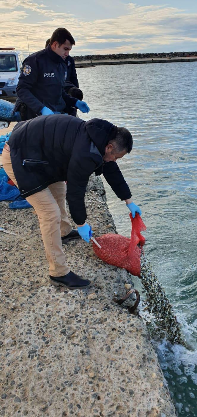 Enez'de bir ayda 15 ton kum midyesi yakalandı