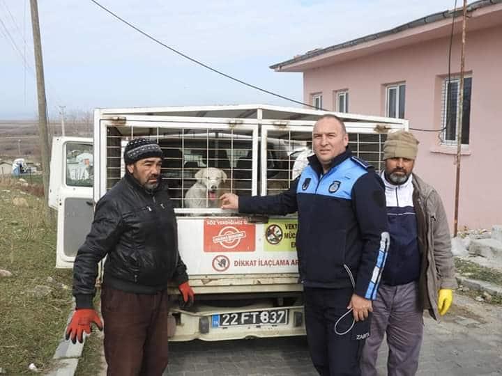 Enez'de Belediye sokak hayvanlarına sahip çıktı