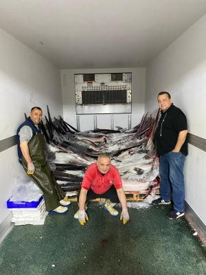 Enez'den İtalya'ya Kılıç ve Akya balığı ihracatı..