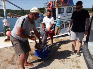 Saros'da Kılıç Balığı Bereketi